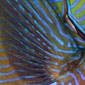 Blue Stripes - BAILEY, Matt