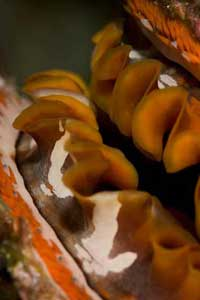 Spiny Oyster - BAILEY, Matt