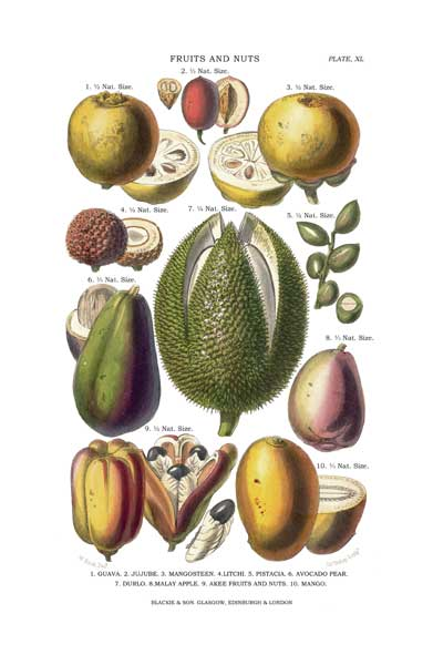 Fruits and Nuts 1 - FITCH, W.