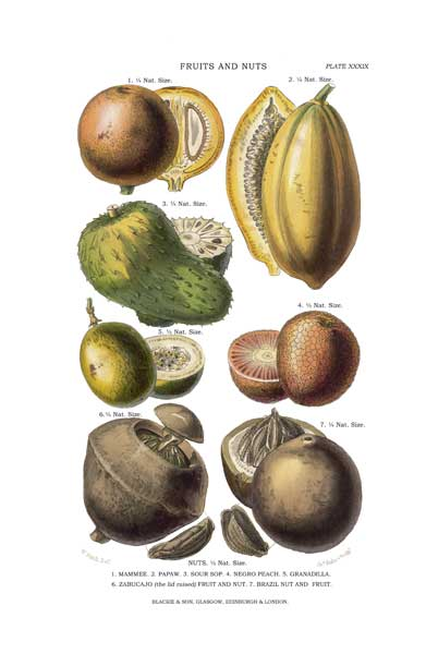Fruits and Nuts 2 - FITCH, W.