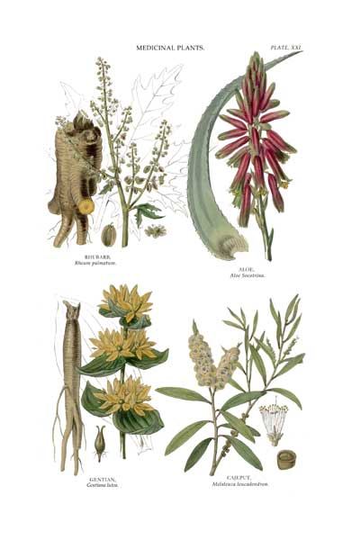 Medicinal Plants 1 - FITCH, W.