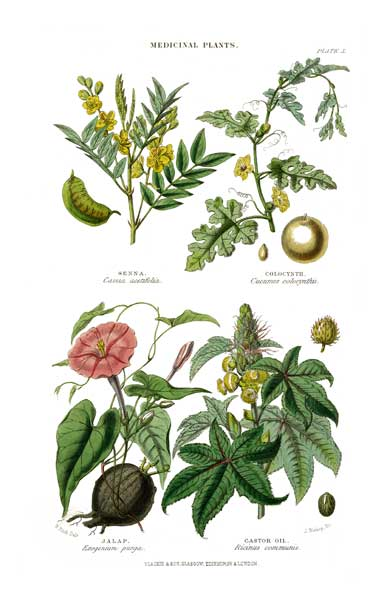 Medicinal Plants 2 - FITCH, W.