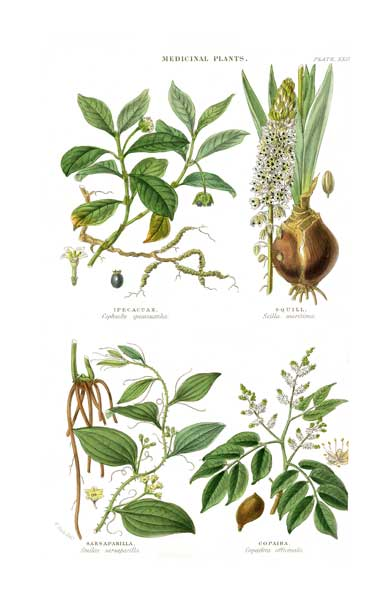 Medicinal Plants 3 - FITCH, W.