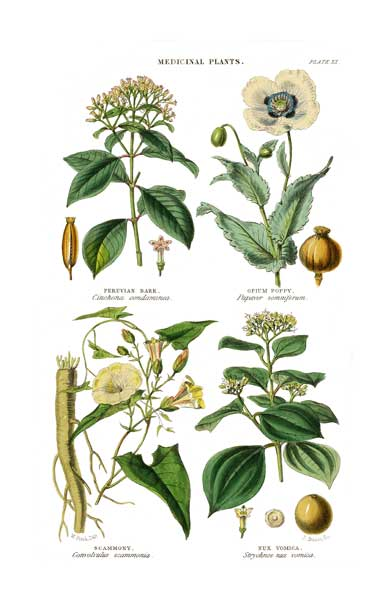 Medicinal Plants 4 - FITCH, W.