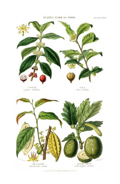 Plants Used as Food 3 - FITCH, W.