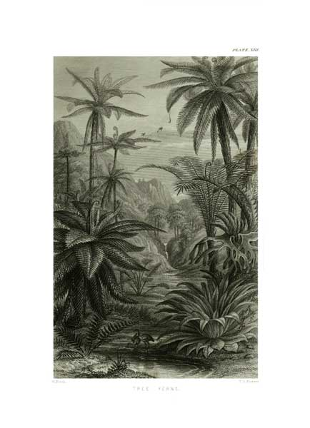 Tree Ferns - FITCH, W.