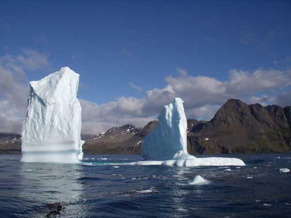 Hound Iceberg - FORESTER-BENNETT, Rupert