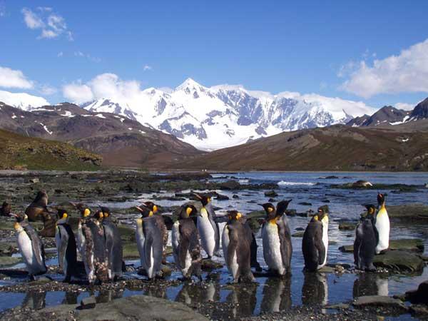 Hound Penguins - FORESTER-BENNETT, Rupert