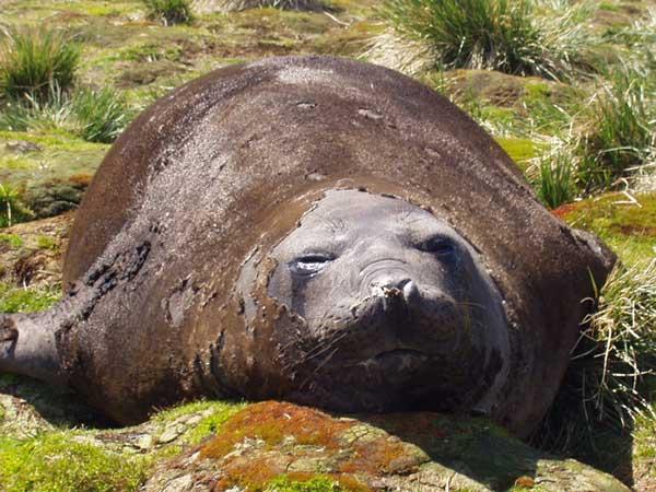Hound Seal - FORESTER-BENNETT, Rupert