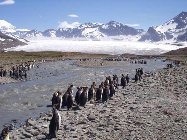 St Andrews Penguins 1 - FORESTER-BENNETT, Rupert