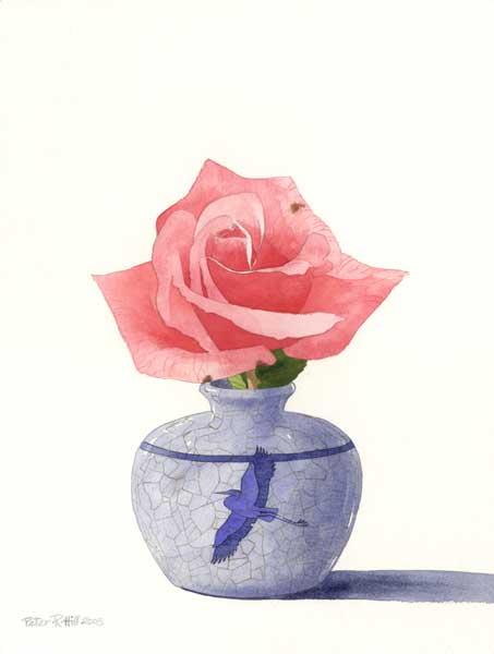 Silver Jubilee Rose - HILL, Peter