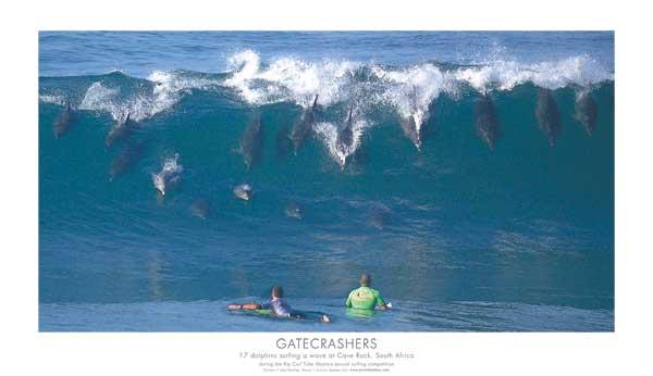 Seventeen Dolphins Surfing - POSTER - PAULING, John