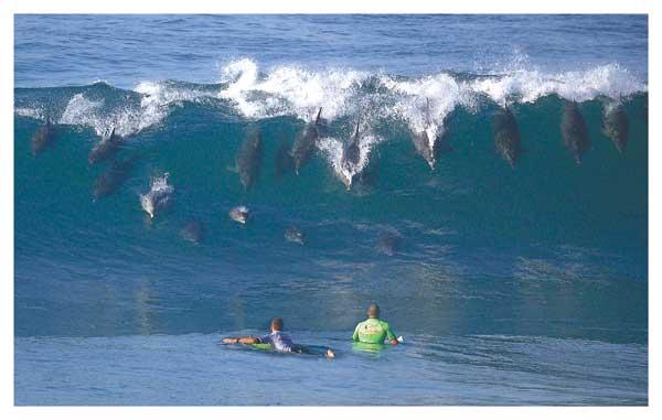 Seventeen Dolphins Surfing - PRINT - PAULING, John