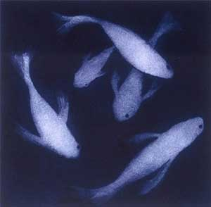 Five Silver Fishes - PERRING, Susie