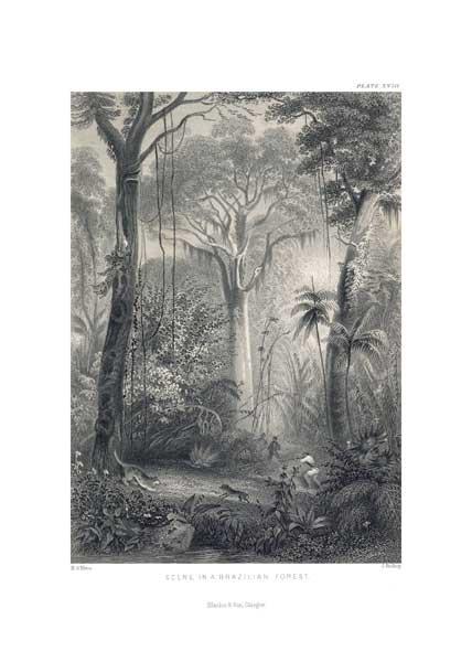 Brazilian Forest - STEWART, James