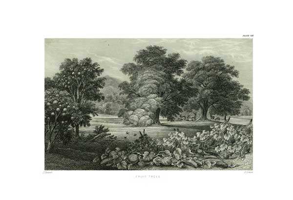 Fruit Trees - STEWART, James