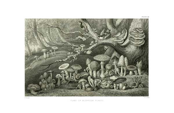 Fungi or Mushroom Plants - STEWART, James