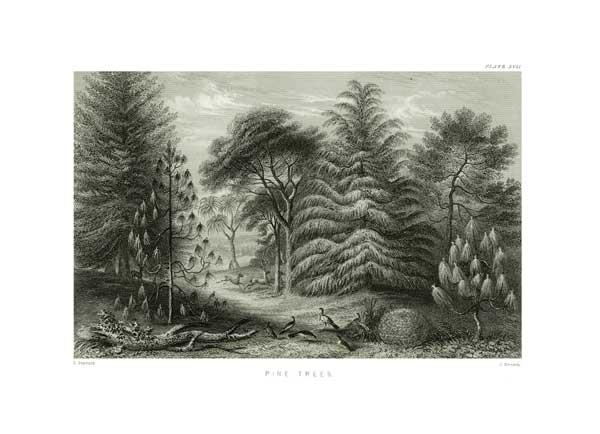 Pine Trees - STEWART, James