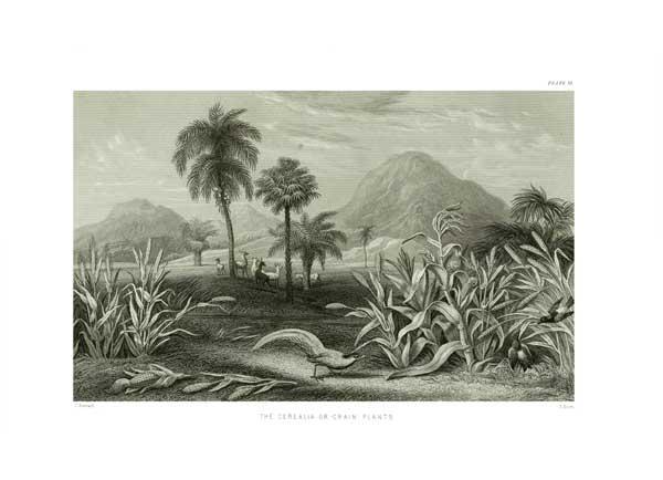 The Cerealia or Grain Tree - STEWART, James