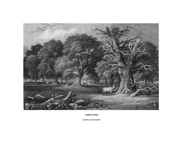 Timber Trees - STEWART, James